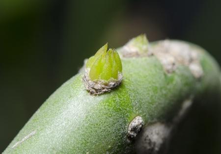 ampliar: Ampliar germina��o Cactus, Tiro macro close-up