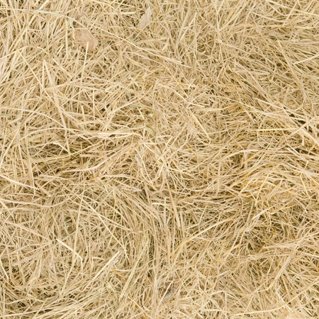 Straw texture background Stock Photo - 19132211