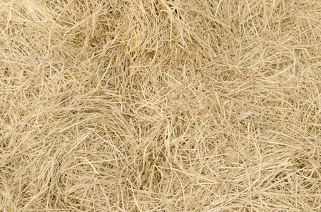 Straw texture background Stock Photo - 19132036