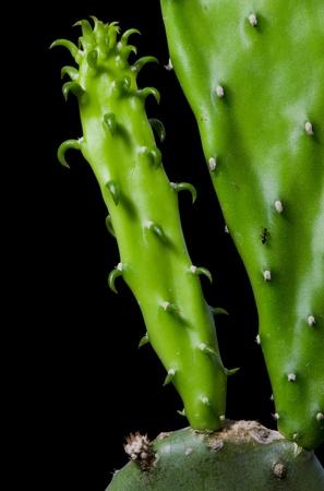 enlarge: Enlarge Cactus germination