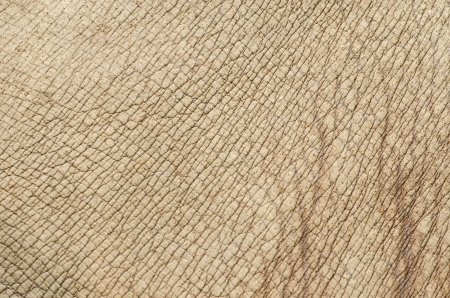Rhino (white rhinoceros) skin texture Stock Photo