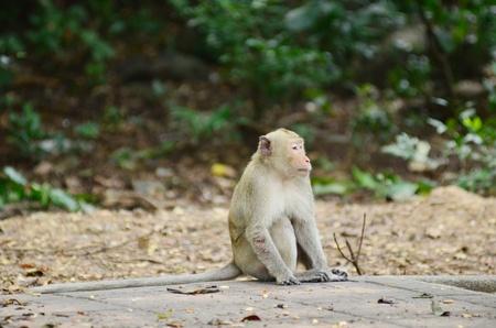 monkey Stock Photo - 19733756