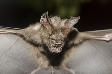 Bat in hand of researcher, Of research studies in the field. photo