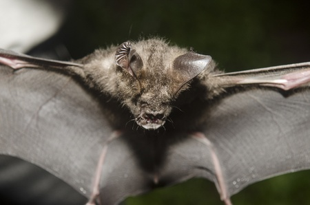 Bat in hand of researcher, Of research studies in the field.