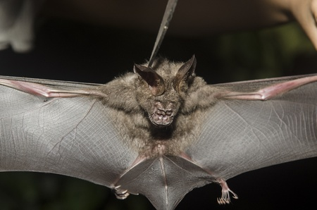 freaky: Bat in hand of researcher, Of research studies in the field.