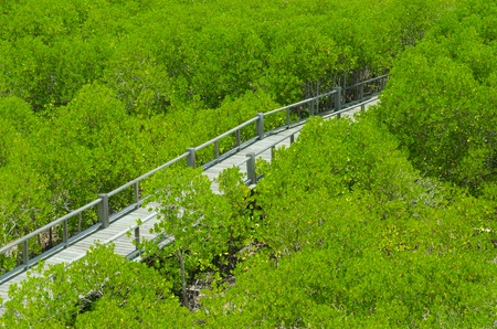 Photo of green fertile mangrove forests of Thailand. photo
