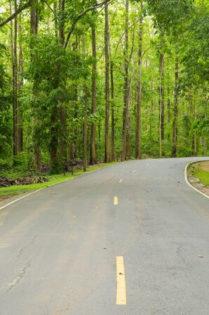 Road to the nature forest photo