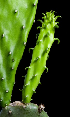 enlarge: Enlarge Cactus germination, Macro shot close up