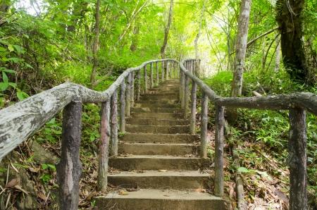pfad: Beleuchtung Tree Trail
