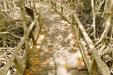 boardwalk trail: Wood path way among the Mangrove forest, Thailand