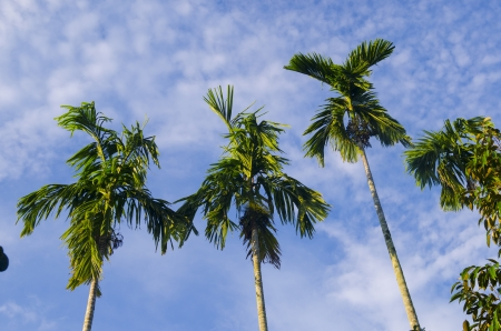 Green palm tree on blue sky background photo