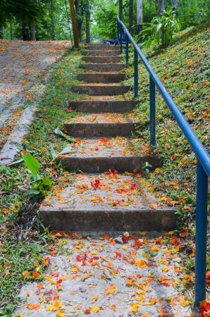 stair way on green garden photo