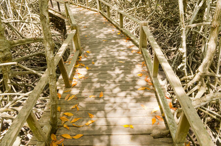 Wood path way among the Mangrove forest, Thailand photo