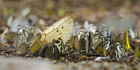 Many butterflies perch on the ground. Macro perspective. photo