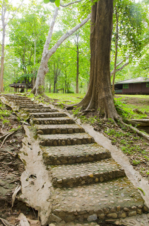 Stairway to jungle, Sai Yok National Park, Kanchanburi,Thailand photo