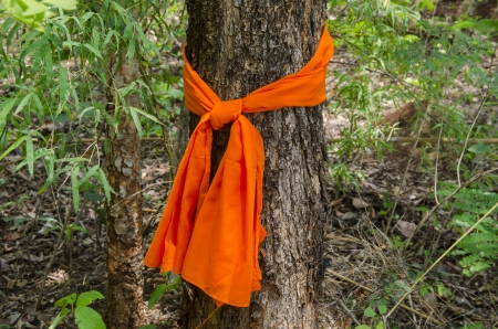 climate change: Conservation tree by tree ordination.