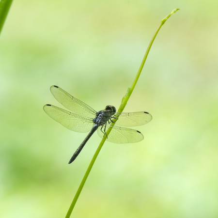 damselfly: Dragonfly with green field, in nature.