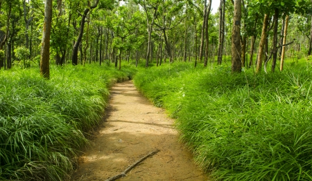 Dry Dipterocarp Forest, Thailand natural field photo