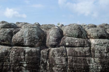 rigorous: Gruppo di licheni su una roccia in natura.