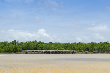 Picture of mangrove forests in tropical countries photo