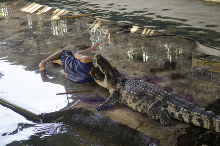 crocodile show in thailand. very exciting show
