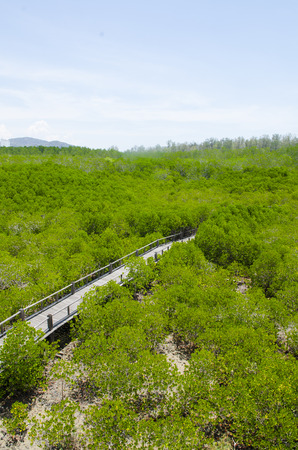 The forest mangrove at Petchaburi, Thailand. Stock Photo - 24616672