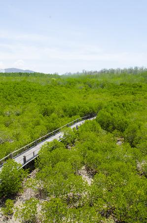 The forest mangrove at Petchaburi, Thailand. Stock Photo - 24616672
