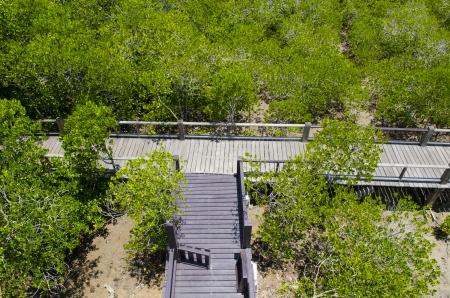 The forest mangrove at Petchaburi, Thailand. Stock Photo - 24616694