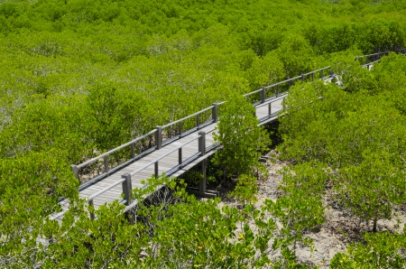 The forest mangrove at Petchaburi, Thailand. Stock Photo - 24615354