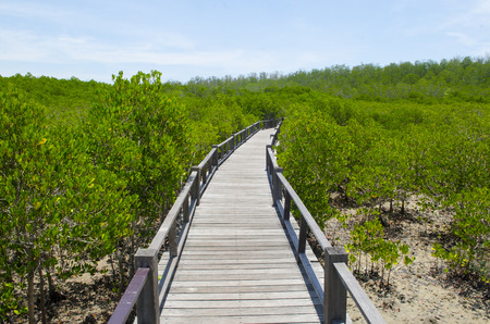 The forest mangrove at Petchaburi, Thailand. Stock Photo - 24615358