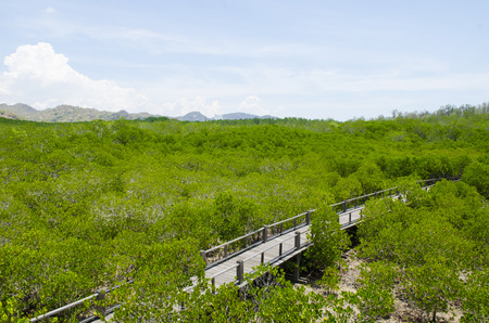 Wooden path in mangrove forest Stock Photo - 24992693