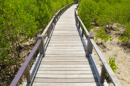 Wooden path in mangrove forest Stock Photo - 24992695