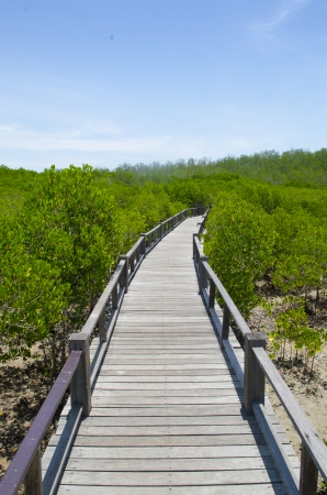 Wooden path in mangrove forest Stock Photo - 24992696