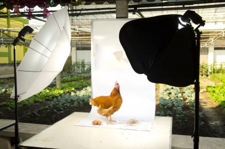 Chicken in Photo studio setup with lighting equipment