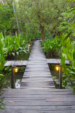 board walk in the tropical forest photo