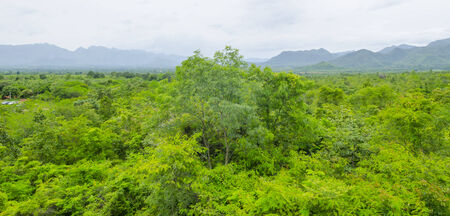 top view of Tropical rain forest in Thailand. photo