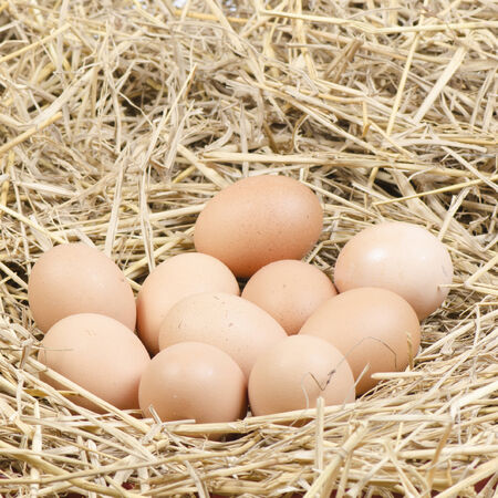 brown chicken eggs in a straw nest photo
