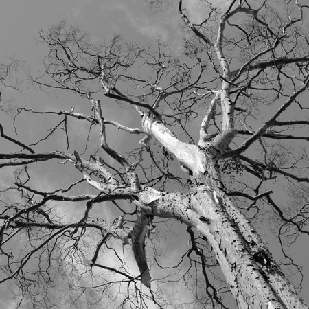 branches of trees in black and white tone photo