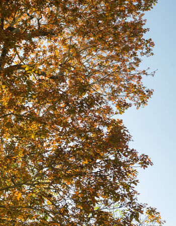 Dry leaves in autumn with blue sky photo