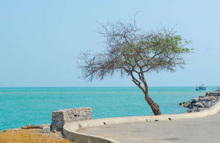 mystique: Tree in a lonely sea. Stock Photo