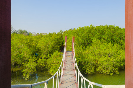 Suspension bridge in mangrove forest, tropical site photo