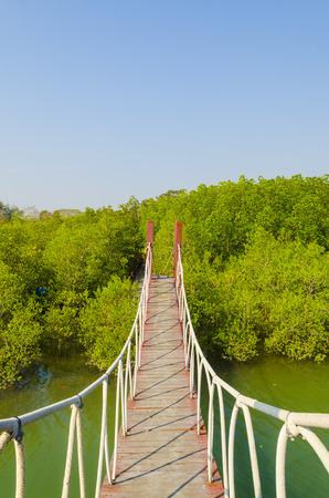 Suspension bridge in mangrove forest, tropical site photo