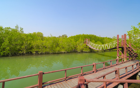 Suspension bridge in tropical mangrove forest, Thailand photo