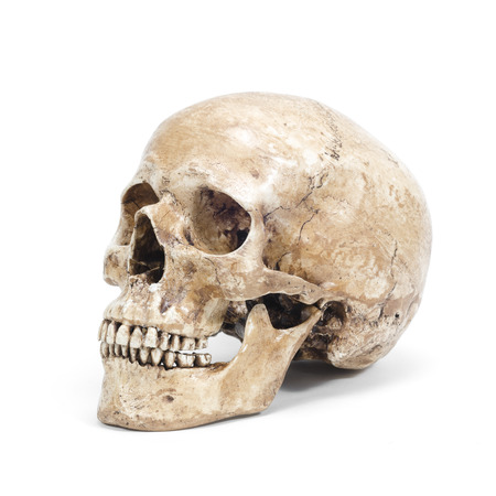 single human skull isolated on white background photo