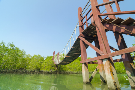 Wooden bridge leading to tropical mangrove forest. photo