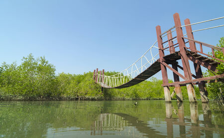mangrove forest: Wooden bridge leading to tropical mangrove forest.