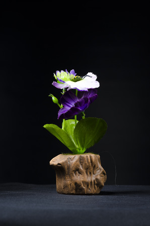 still life with flower and ornamental on black background photo