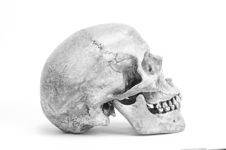 human skull in black and white color, isolated on white background photo