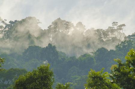 khao: Khao Yai National Park, Thailand