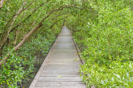 lightsome: bridge to the mangrove forest Stock Photo